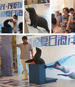 引爆夏日,世茂茂悦府举办清凉夏日海洋节